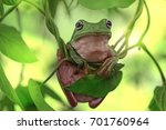 dumpy frog close up on branch | Shutterstock . vector #701760964