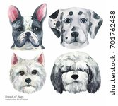 portrait cute dog set isolated... | Shutterstock . vector #701762488