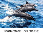 Wild Dolphins In The Pacific...