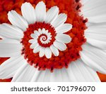 white red camomile daisy cosmos ... | Shutterstock . vector #701796070