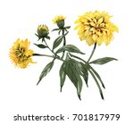 hand drawn yellow flowers with... | Shutterstock . vector #701817979