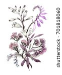 hand drawn purple flower... | Shutterstock . vector #701818060
