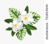 frangipani exotic flowers ... | Shutterstock .eps vector #701819644
