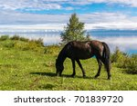 a horse grazes on the shore of... | Shutterstock . vector #701839720