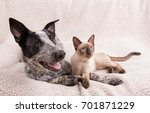 Stock photo adorably cute dog and cat together on a soft blanket looking to the right of the viewer 701871229