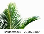 palm leaf isolated on white... | Shutterstock . vector #701873500