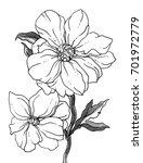 white peony garden flower... | Shutterstock . vector #701972779