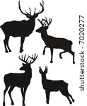 illustration with deer... | Shutterstock . vector #7020277