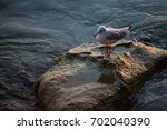 seagull on a rock at dusk | Shutterstock . vector #702040390