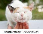 Cute Cat Cuddled By A Hand