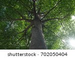 ant's eye view of the large... | Shutterstock . vector #702050404