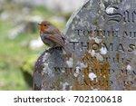 european robin in a cemetery | Shutterstock . vector #702100618