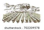vineyard and winery. vector... | Shutterstock .eps vector #702209578