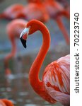 Portrait Of A Pink Flamingo In...