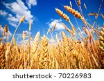 Wheat Field And Blue Sky With...