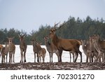 young female deer group and... | Shutterstock . vector #702301270