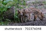 young wild boar | Shutterstock . vector #702376048