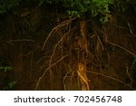small green plants and roots on ...   Shutterstock . vector #702456748