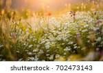 meadow pipit and other flowers... | Shutterstock . vector #702473143