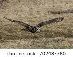 Stock photo owl flying 702487780