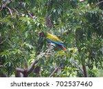parrot in costa rica   Shutterstock . vector #702537460