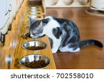 little grey cat is eating dry... | Shutterstock . vector #702558010