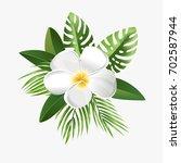 frangipani. white plumeria ... | Shutterstock .eps vector #702587944