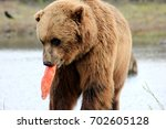 Small photo of Grizzly the Bear With His Salmon