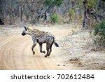 wild hyena in the african bush | Shutterstock . vector #702612484