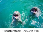 Close up two dolphins smiling in the sea