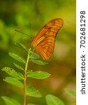 Small photo of Beautiful orange butterfly (Julia Heliconian, Dryas julia.)