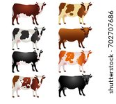 different breeds of cows.... | Shutterstock .eps vector #702707686