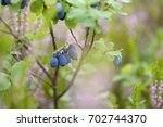 foraging bacground with edible... | Shutterstock . vector #702744370