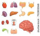 cartoon human organs set.... | Shutterstock . vector #702803068