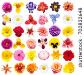 Stock photo flowers collection of assorted roses daisies irises pansies tigridia amaryllis lilies 702832648
