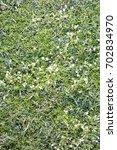 flower on the green grass   Shutterstock . vector #702834970