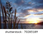 Reeds And Ocean Sunset