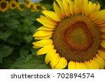 Sunflower Closeup Detail Iii