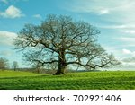springtime oak tree in a field... | Shutterstock . vector #702921406