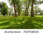 sunny afternoon in woods of... | Shutterstock . vector #702928024