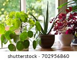 house plant display on the... | Shutterstock . vector #702956860