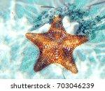 orange starfish starfish found ... | Shutterstock . vector #703046239