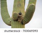 A Bird Nest Also Known As A...