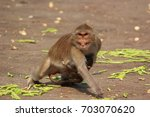 animal | Shutterstock . vector #703070620
