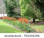 Red Hot Poker Flowers Garden...