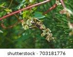 bug | Shutterstock . vector #703181776