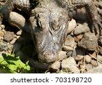 Portrait Of The Crocodile...