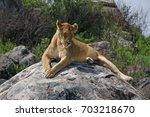 Lioness On Rock In Serengeti ...