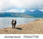 yak on the shore of the lake | Shutterstock . vector #703267750
