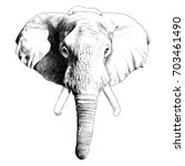 elephant head sketch vector... | Shutterstock .eps vector #703461490
